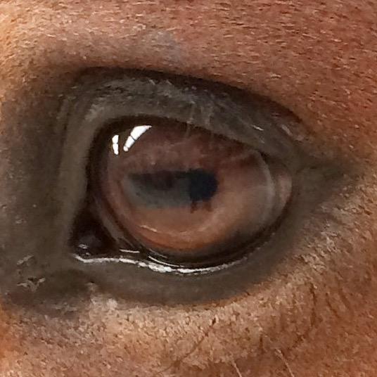 oeil cheval 2014-10-27 12.22.42